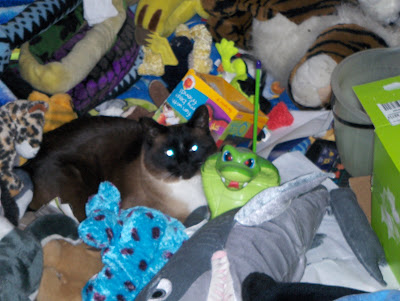 photo of Koko sleeping in a pile of toys