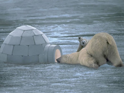 photo of a bear looking inside an igloo
