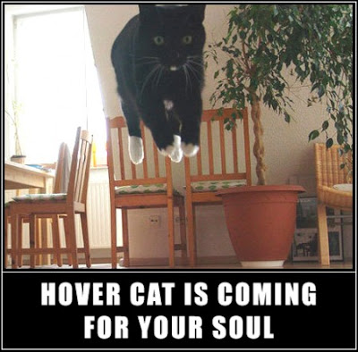 photo of a hover cat