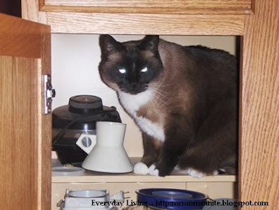 photo of koko in a cabinet