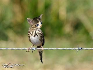 Fågelkatt?