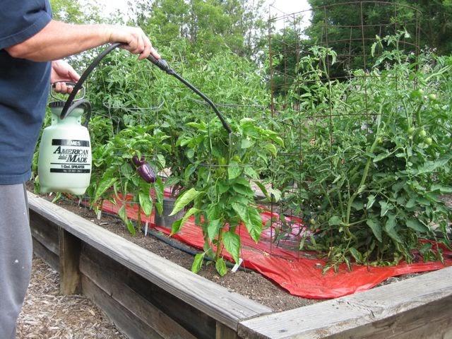 The Farmer Fred® Rant: Foliar Feeding: A Waste of Time and Money?