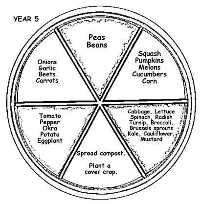 Detailed Nitrogen Cycle Diagram