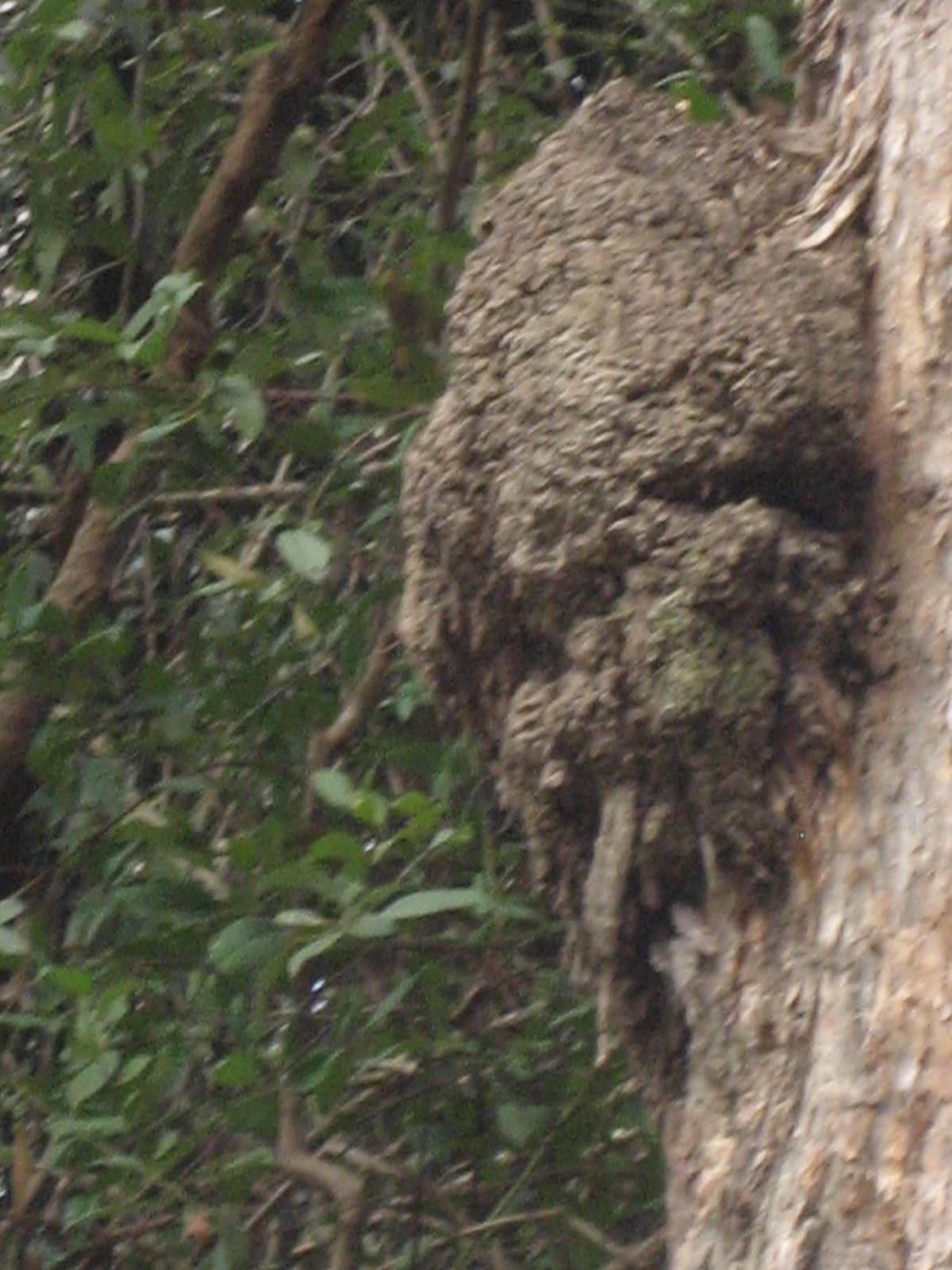 Top Ten Ways To Prevent Termite Attack Part One Of Ten