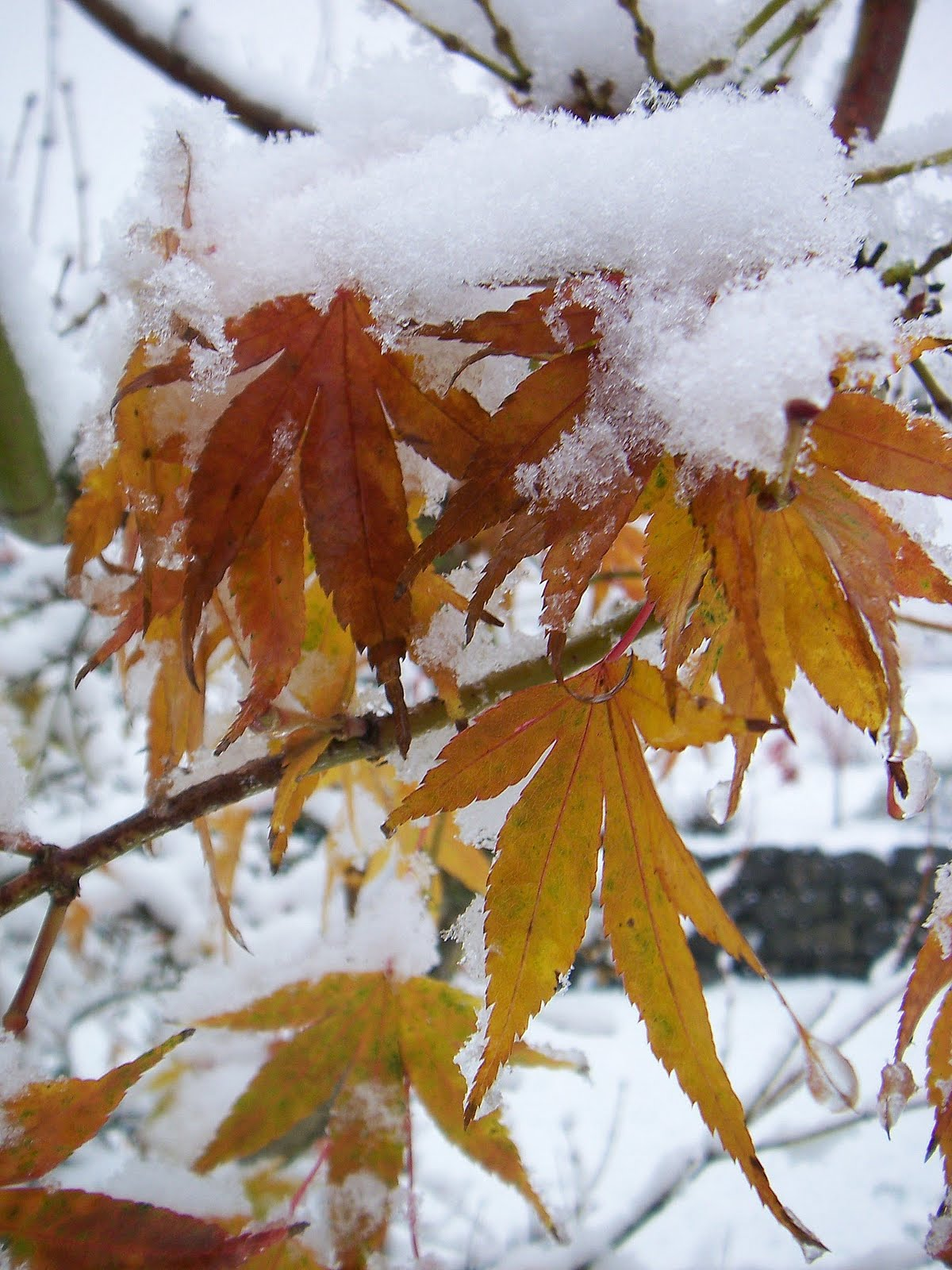 Eclectic Photography Project Day 235 Autumn Snow