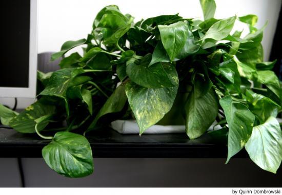 Feng shui decoracion con plantas un elemento valios simo for Plantas para el hogar feng shui