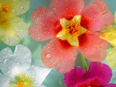 flores-de-varios-colores-cubiertas-de-rocio