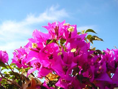 flores-de-color-rosa