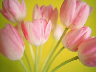 ramo-de-tulipanes-color-rosa