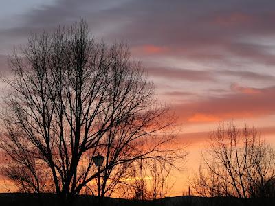 arboles-sin-hojas-ante-una-puesta-de-sol