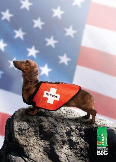 IAMS Pet Food Advertising Slogan, Tagline - Adglitz