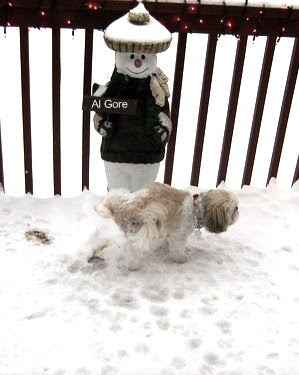 Snowbound dog lifts a leg on Al Gore