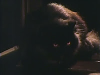 the cat with glowing eyes