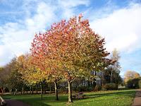 Paddy Freemans Park