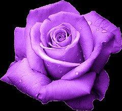 El Lenguaje De Las Rosas Davidangelo87s Blog