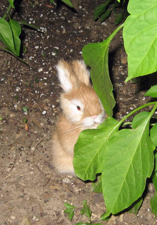 [Bunny.jpg]