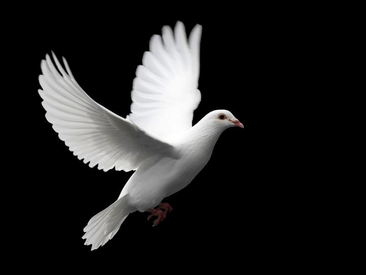 Enchei Vos Do Espírito Santo De: Jesus Retira-se Para Orar: ENCHEI-VOS DO ESPÍRITO SANTO