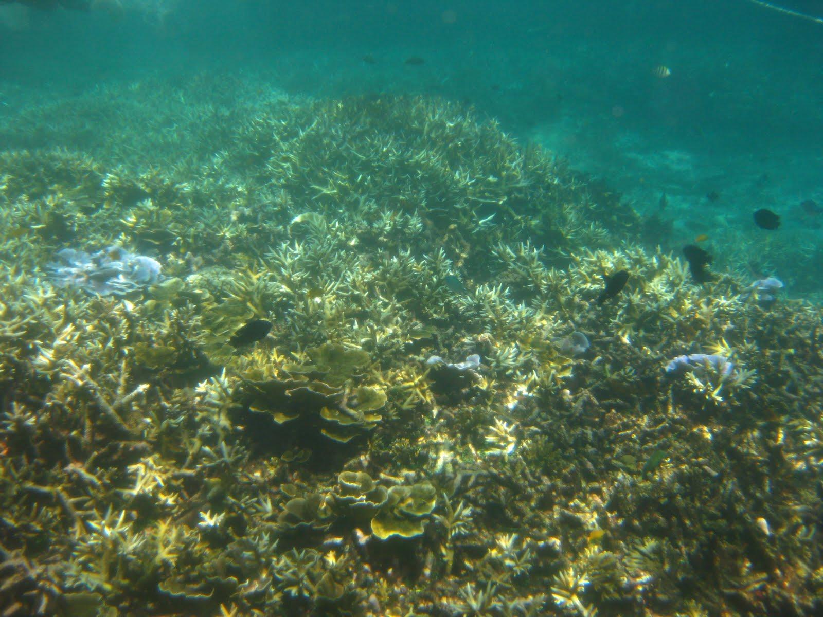 pemandangan dasar laut pulau redang
