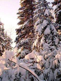 Nature Sounds: Winter Nature Sounds Recordings