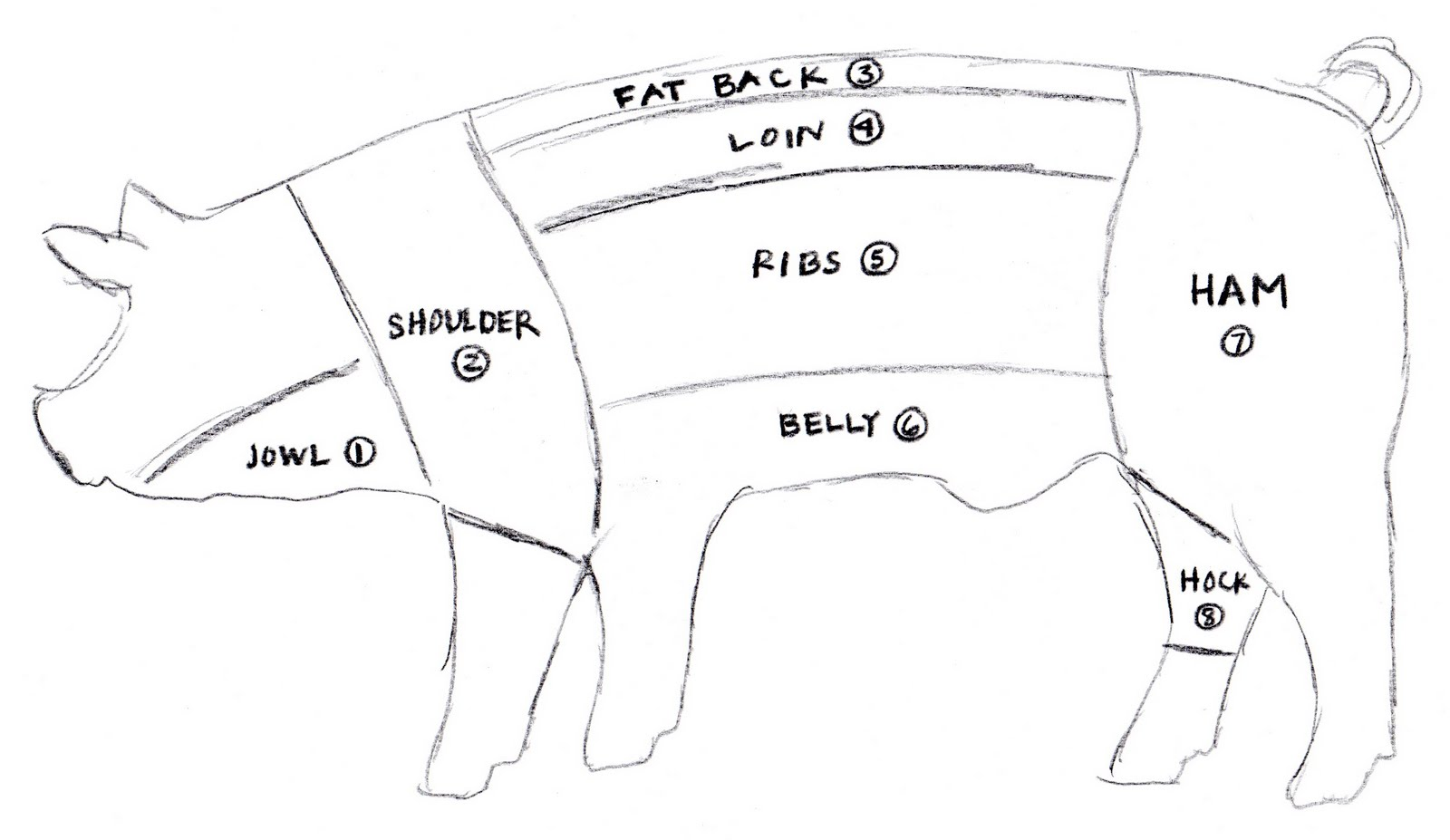 pig body diagram wiring diagram blogs pork cuts chart pig food diagram [ 1600 x 927 Pixel ]