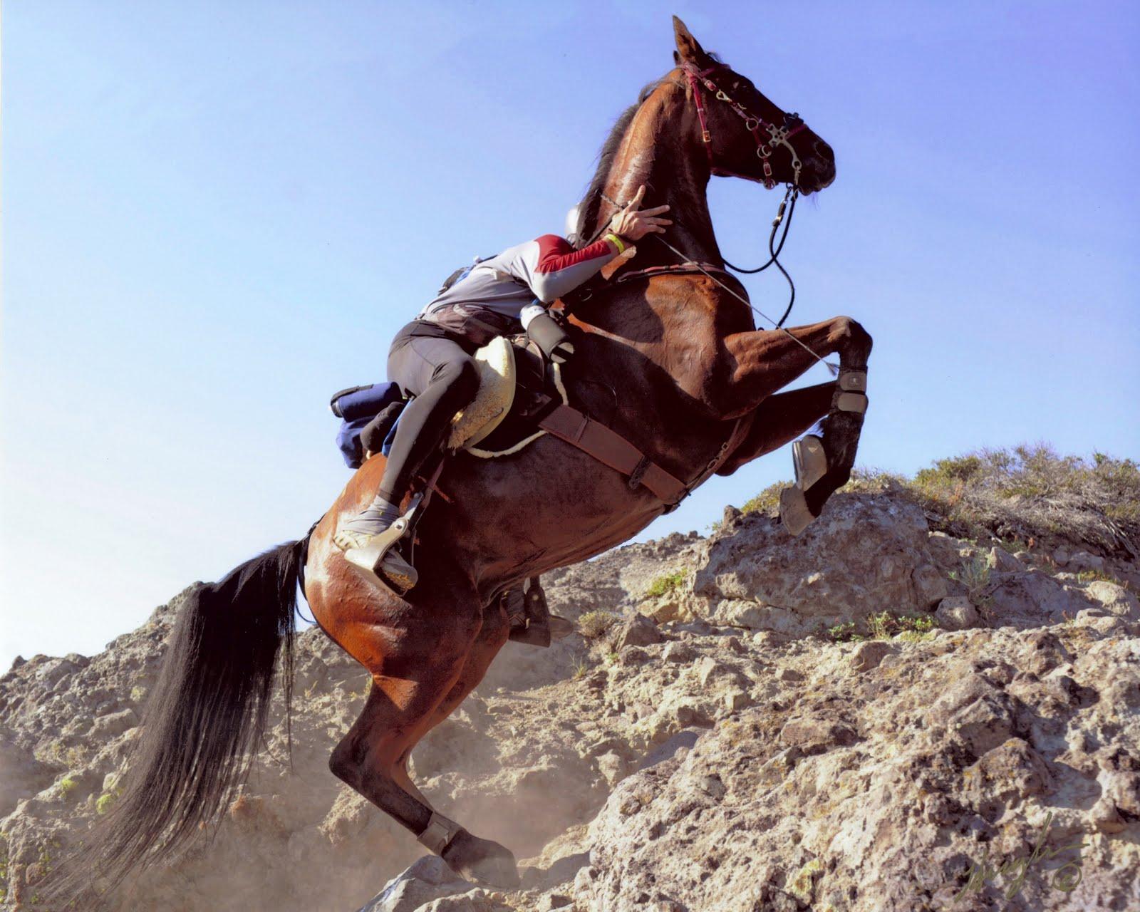 Endurance Trails