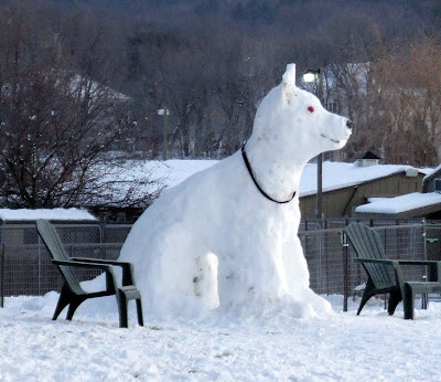 snow dog, snowdog, anjing salji