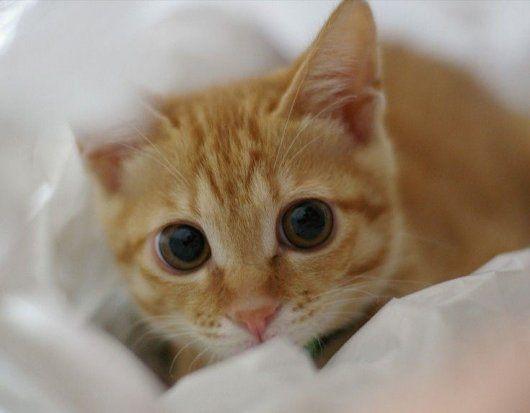 I Love Cats: CUTE KITTENS