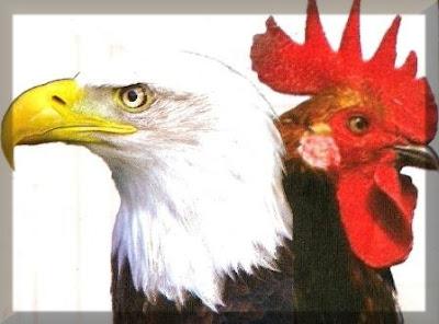 Resultado de imagem para a diferença entre a  aguia  e  a  galinha