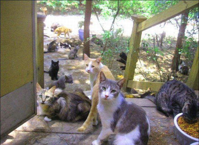 New Home For Homeless Cats Damn Cool Pictures