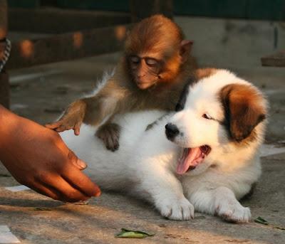 الصداقة بين الحيوانات
