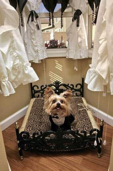 Dogs Live In A 20000 Victorian Mansion Damn Cool Pictures