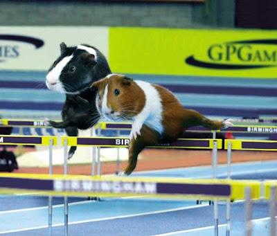 [Image: Animal_Olympics_03.jpg]