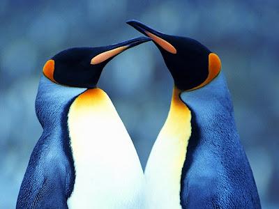 Free 3d Wallpaper Backgrounds Love Pinguins