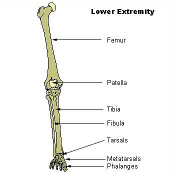 twisted leg diagram bent leg diagram at home for him: march 2010