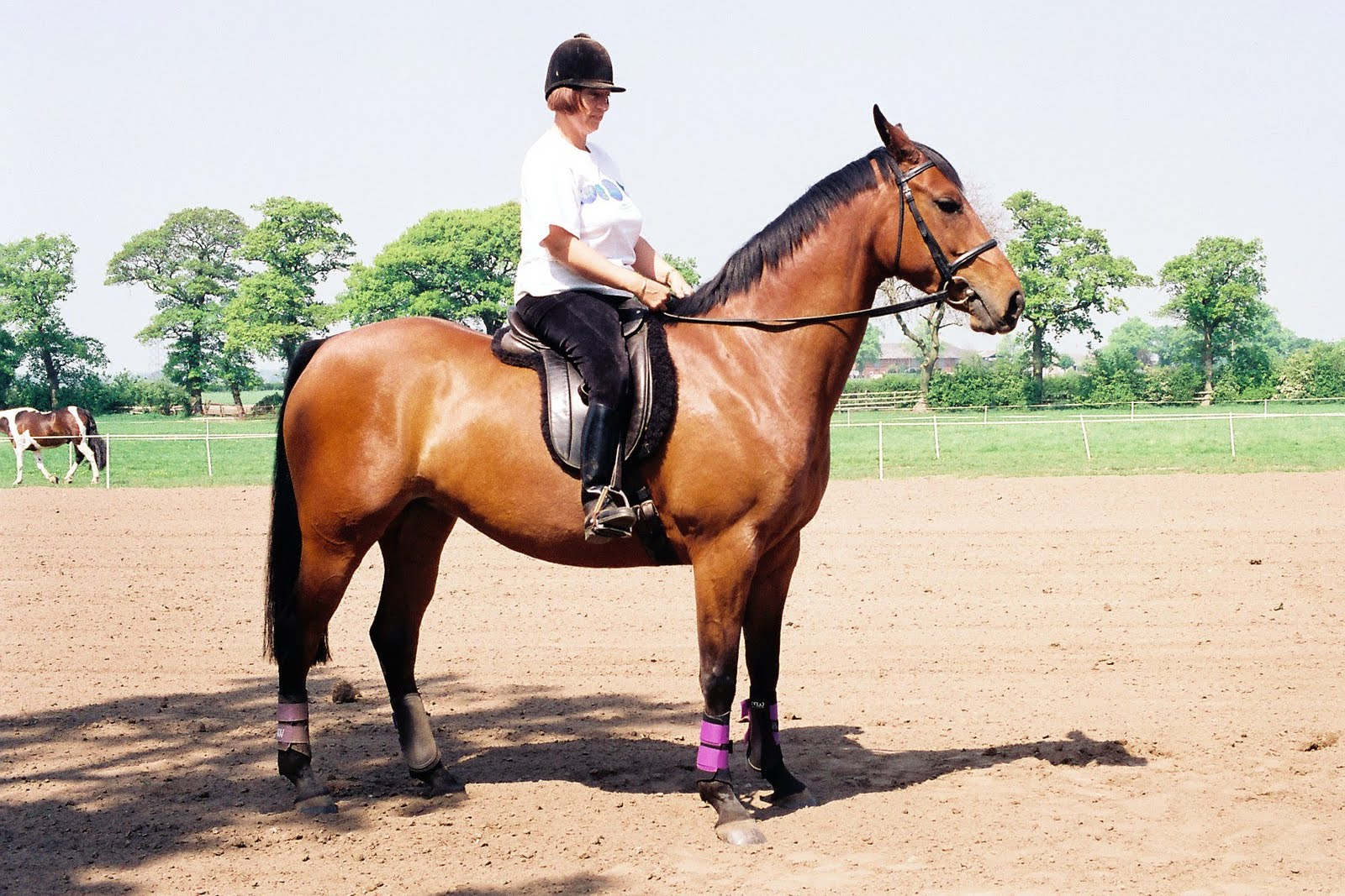 Dave And Mandy At Pmp Emma Horses Kelsall Hill Equestrian