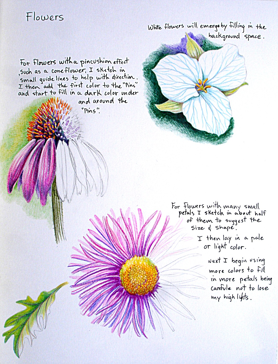 How To Draw Flowers Step By Step With Pictures