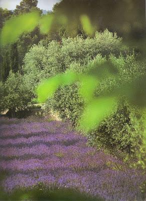 http://www.linenandlavender.net/2009/07/linen-and-lavender.html