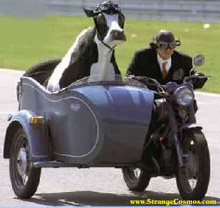 Keywording Central: Don't Have a Cow About Keywording Sidecars