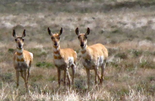 Eric Valentines Praise Photography Blog Hart Mountain National Antelope Refuge