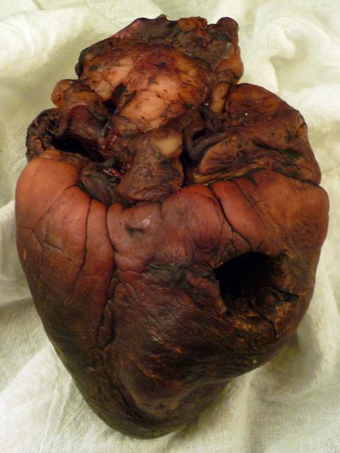mummified vampire heart believe it or not unbelievable