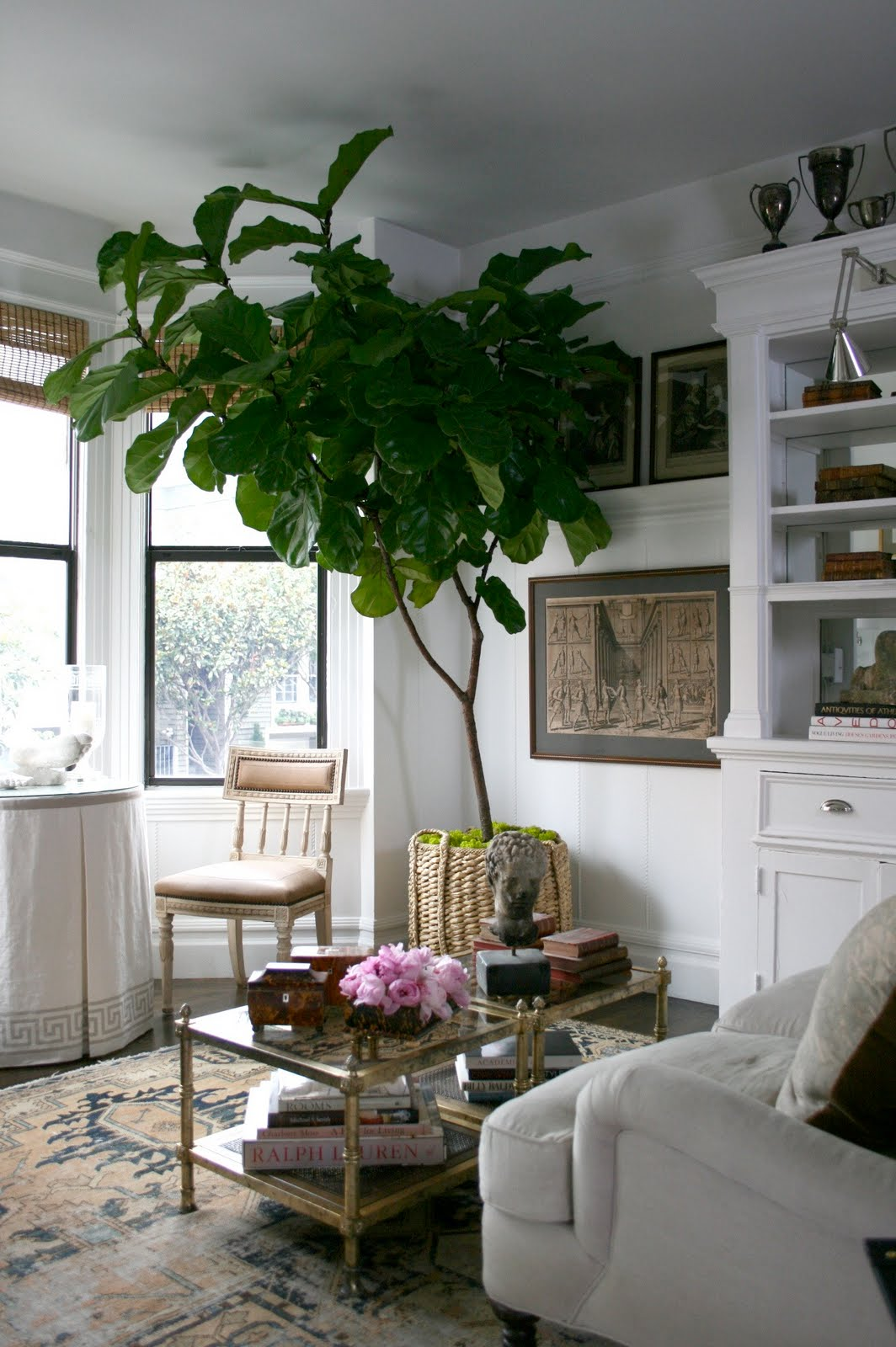 Rubber Plant In Living Room