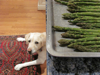 Lambeau helping in the kitchen with a pan of asparagus ready to roast