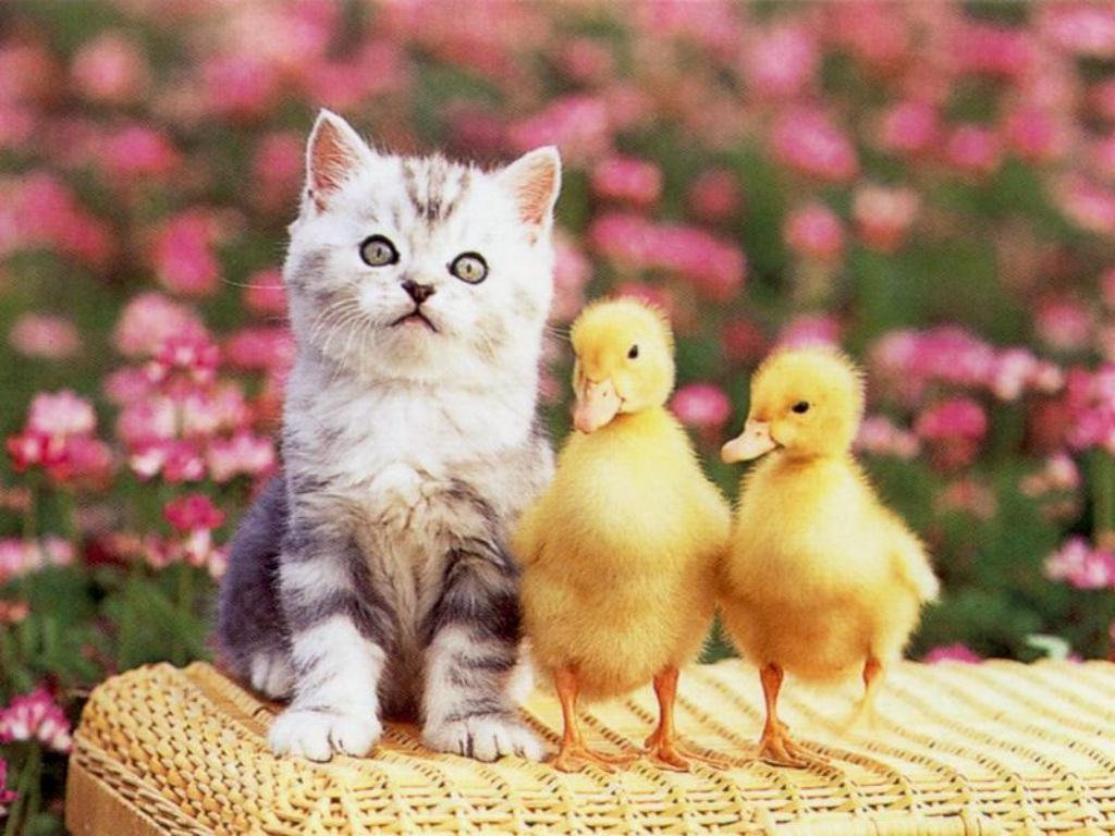Facebook italia immagini e sfondi pasquali auguri di - Cute kittens hd images ...