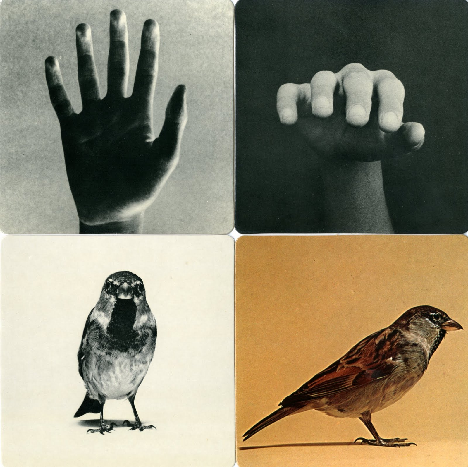 stopping off place  bruno munari  images of reality