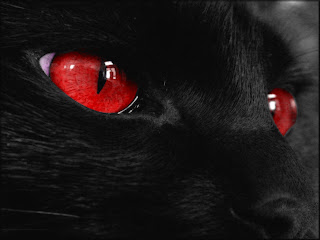 Zwarte kat met rode ogen
