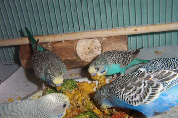 Budgies are Awesome: January 2011