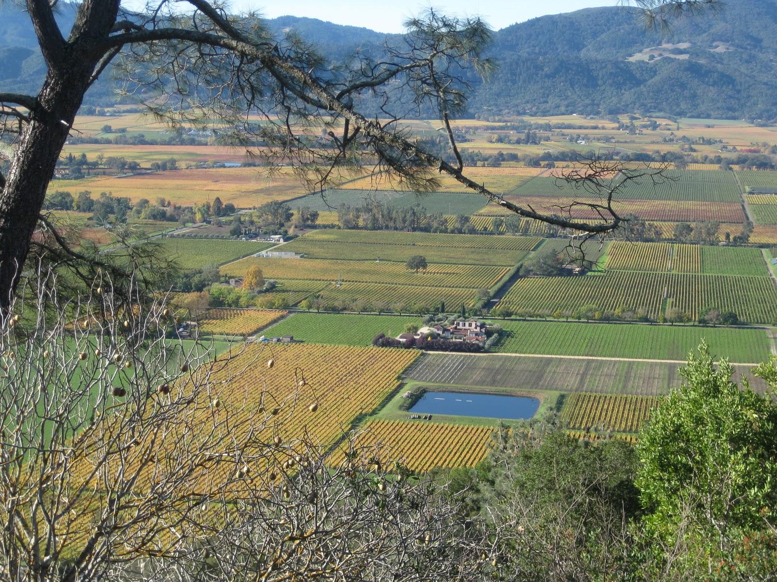 Piña Napa Valley: Tha Fall Colors