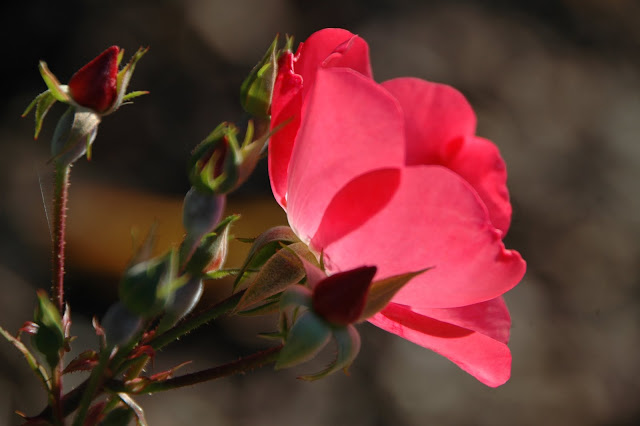 Éclectique: Mon jardin, ton lierre, ma fleur...