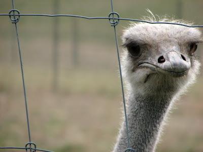 Emu enighet om separata omrostningar