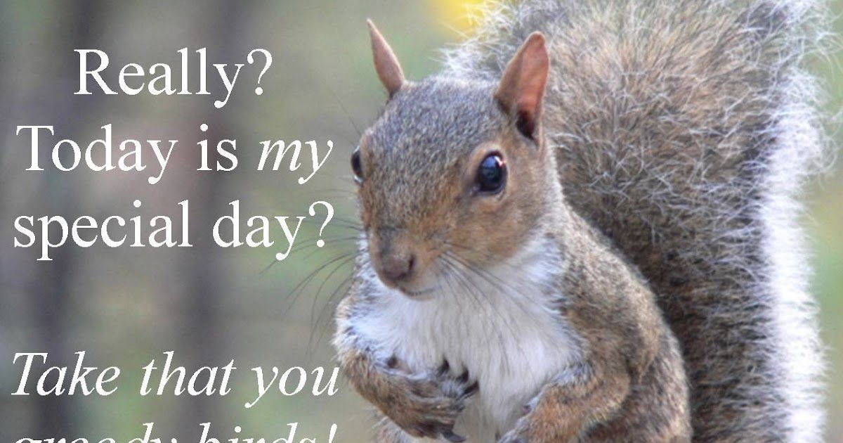 Wild Birds Unlimited Its National Squirrel Appreciation -2579